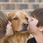 consejos sobre los cuidados de los animales